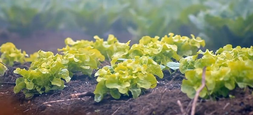 agricultura ecológica sostenible