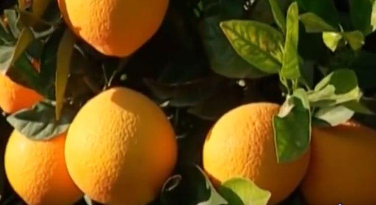 naranjas online de valecia ecológicas